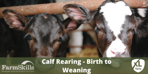 Calf Rearing - Birth to Weaning