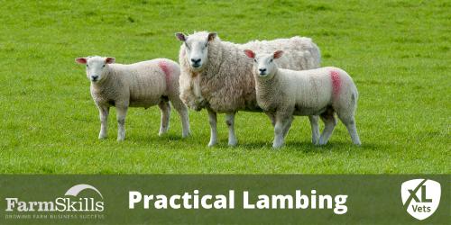 Practical Lambing
