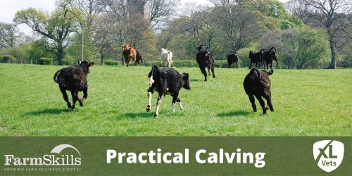 Practical Calving